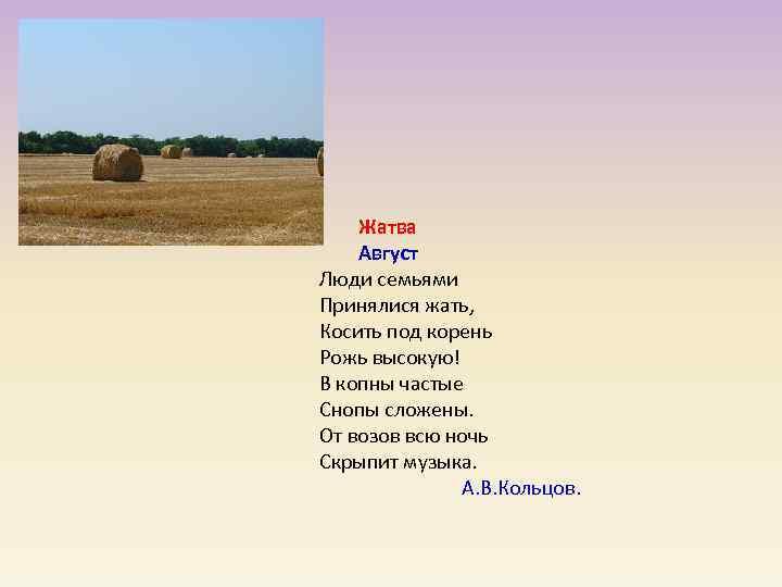 Жатва   Август Люди семьями Принялися жать, Косить под корень Рожь