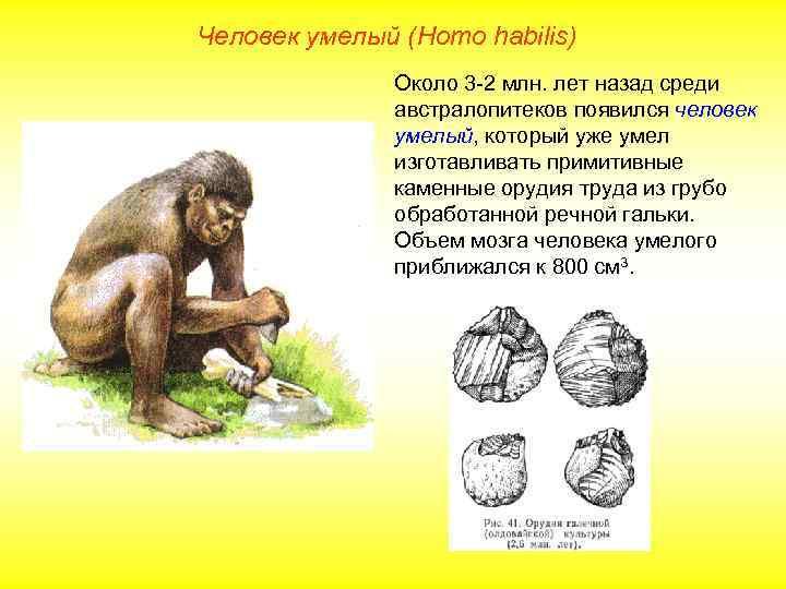 Человек умелый (Homo habilis)    Около 3 -2 млн. лет назад среди