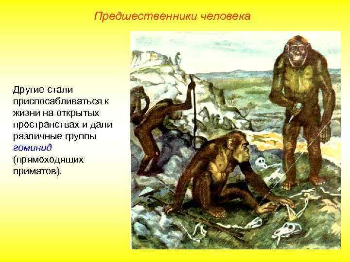 Предшественники человека Другие стали приспосабливаться к жизни на открытых пространствах