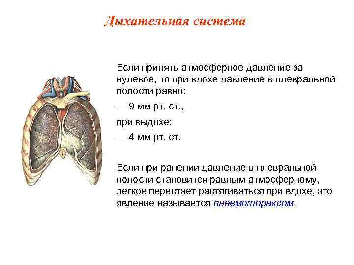 Дыхательная система  Если принять атмосферное давление за нулевое, то при вдохе давление в