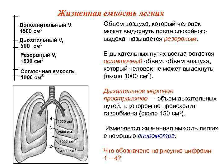 Жизненная емкость легких  Объем воздуха, который человек  может выдохнуть после спокойного