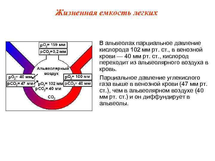 Жизненная емкость легких   В альвеолах парциальное давление  кислорода 102 мм рт.