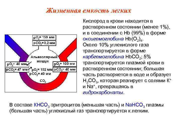 Жизненная емкость легких     Кислород в крови находится