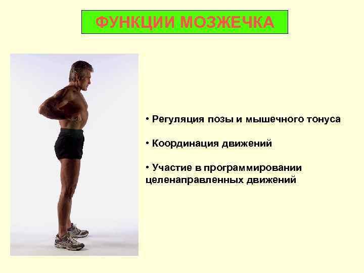 ФУНКЦИИ МОЗЖЕЧКА   • Регуляция позы и мышечного тонуса  • Координация движений