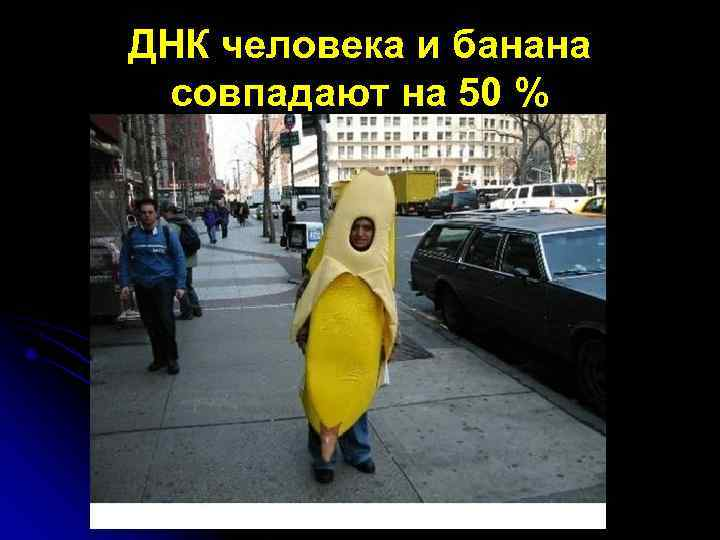 ДНК человека и банана совпадают на 50 %