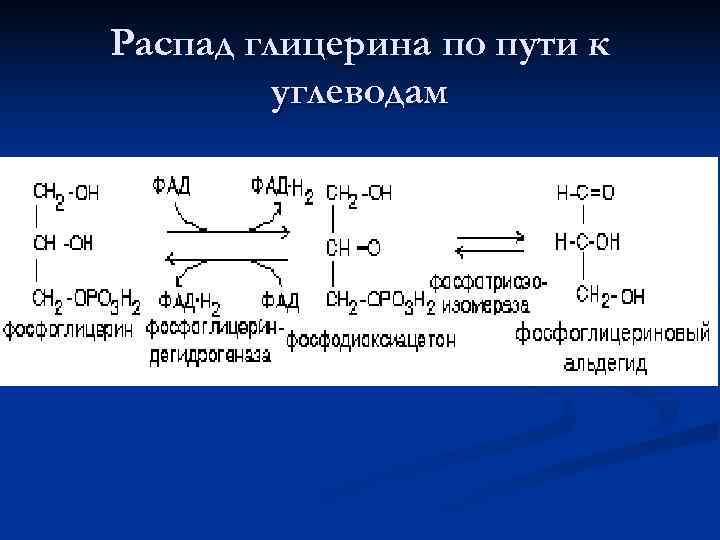 Распад глицерина по пути к   углеводам