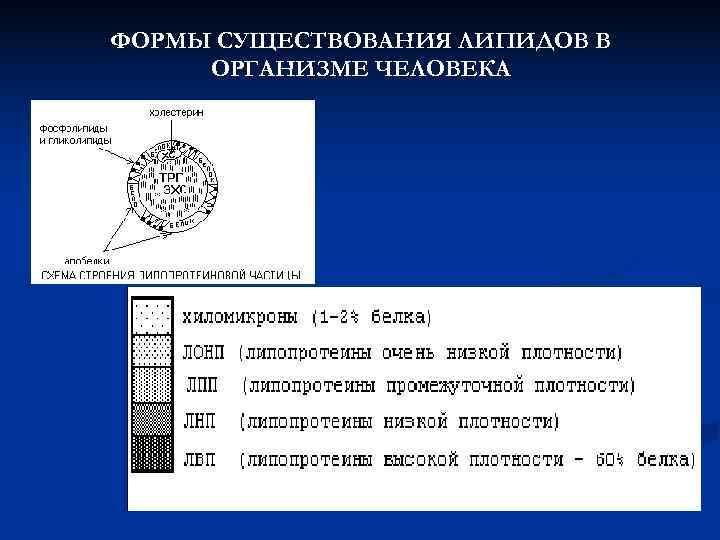 ФОРМЫ СУЩЕСТВОВАНИЯ ЛИПИДОВ В ОРГАНИЗМЕ ЧЕЛОВЕКА