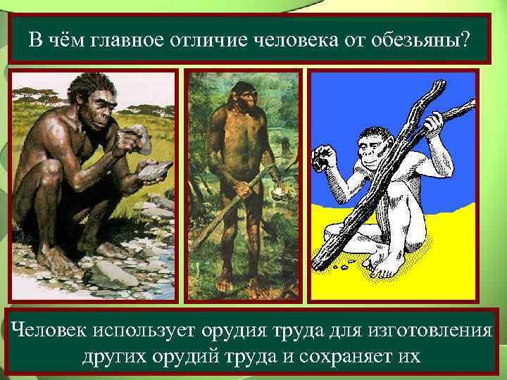 В чём главное отличие человека от обезьяны? Человек использует орудия труда для изготовления