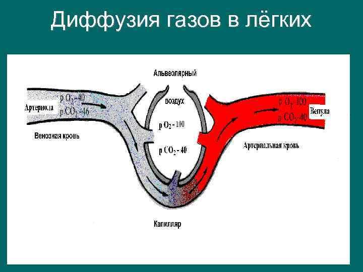 Диффузия газов в лёгких