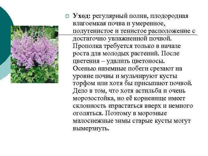 ¡  Уход: регулярный полив, плодородная влагоемкая почва и умеренное,  полутенистое и тенистое