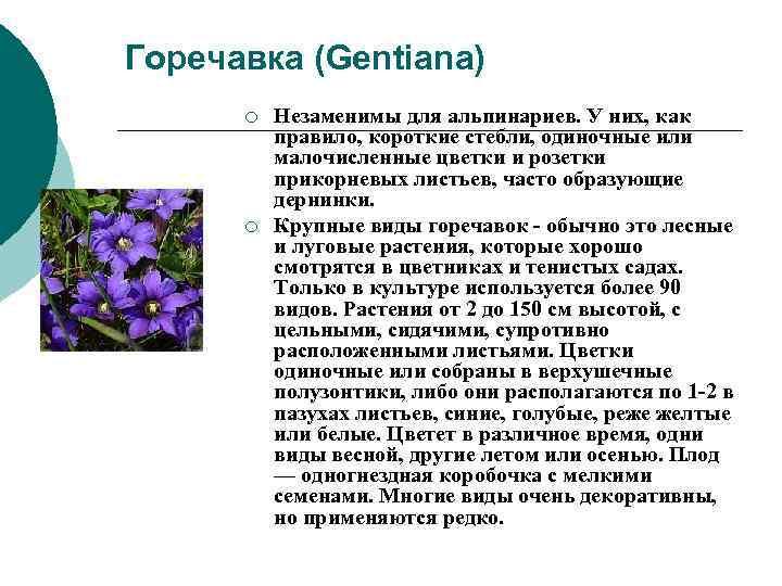 Горечавка (Gentiana)  ¡  Незаменимы для альпинариев. У них, как  правило, короткие
