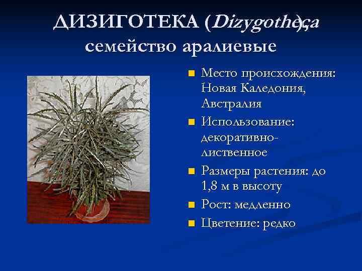 ДИЗИГОТЕКА (Dizygotheca    ),  семейство аралиевые   n  Место