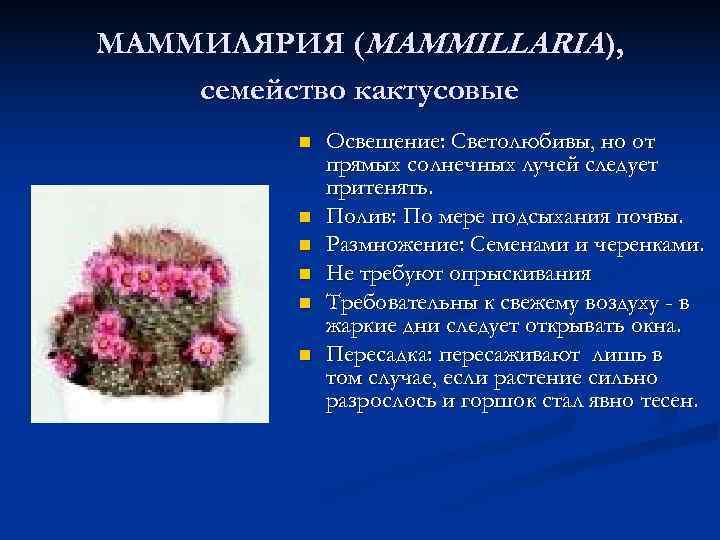 МАММИЛЯРИЯ (MAMMILLARIA ), семейство кактусовые   n  Освещение: Светолюбивы, но от