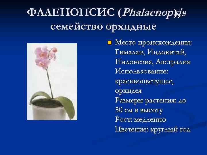 ФАЛЕНОПСИС (Phalaenopsis    ), семейство орхидные   n  Место происхождения: