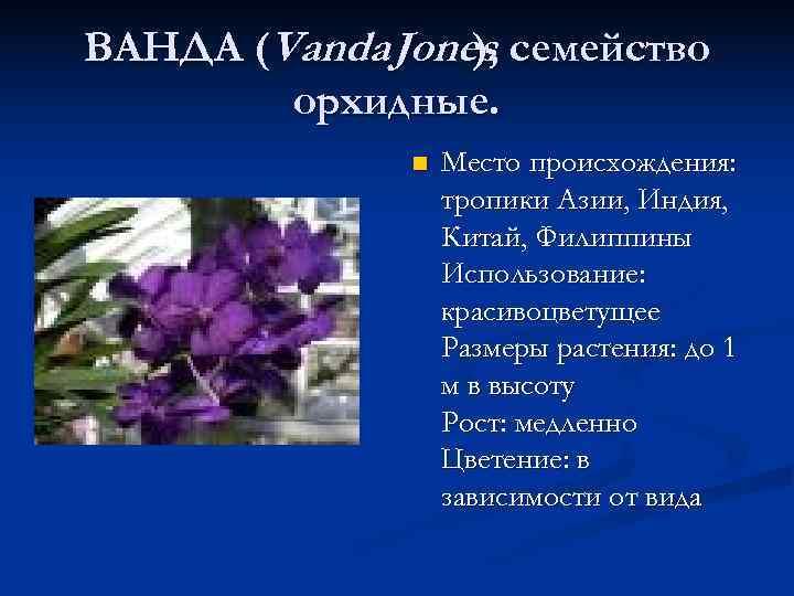 ВАНДА (Vanda Jones, семейство   ),    )   орхидные.