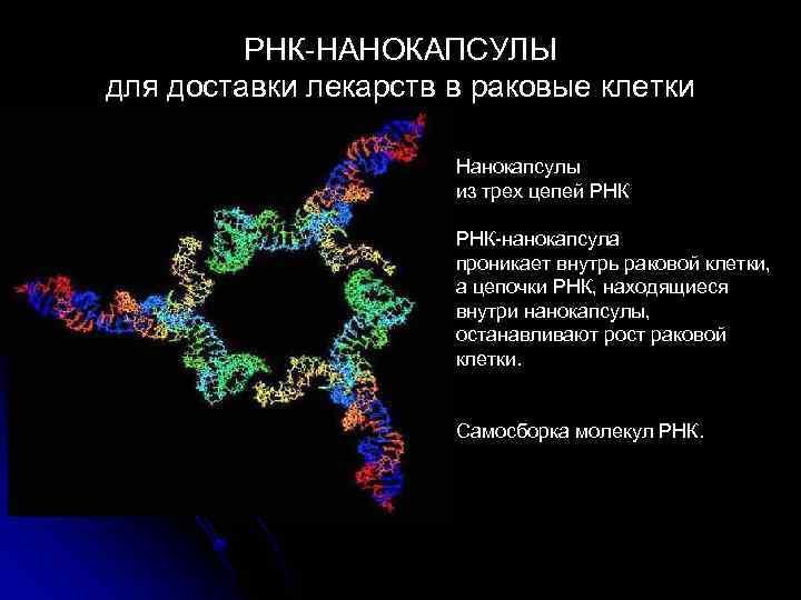 РНК НАНОКАПСУЛЫ для доставки лекарств в раковые клетки Нанокапсулы из трех цепей РНК нанокапсула