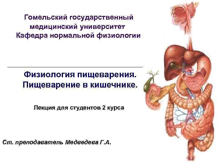 Гомельский государственный  медицинский университет Кафедра нормальной физиологии   Физиология пищеварения.