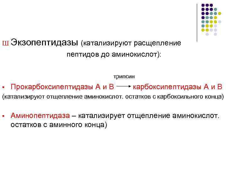 Ш Экзопептидазы (катализируют расщепление     пептидов до аминокислот):