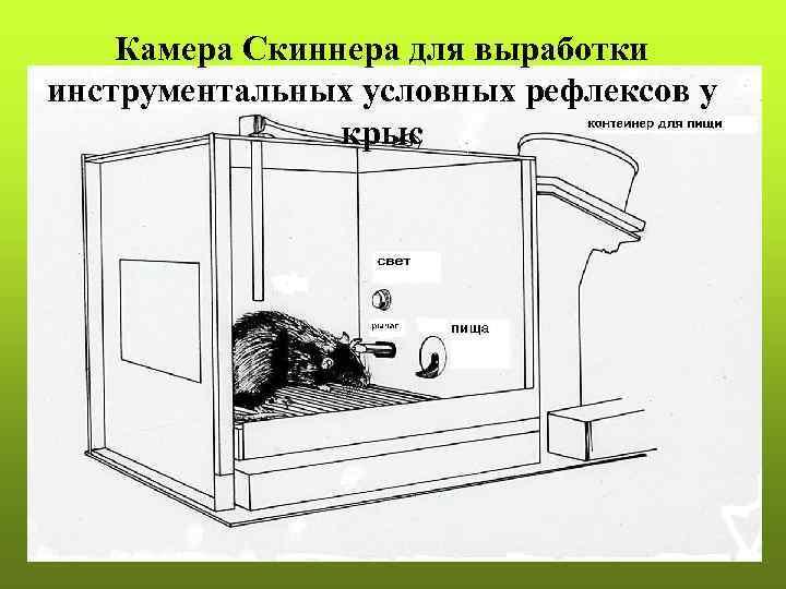 Камера Скиннера для выработки инструментальных условных рефлексов у   крыс