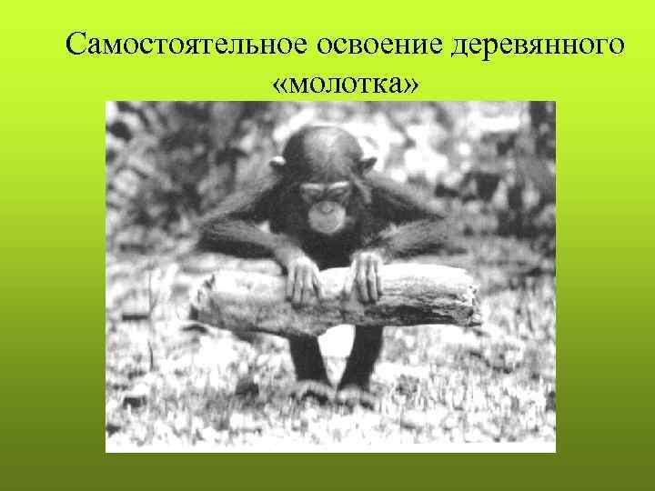 Cамостоятельное освоение деревянного    «молотка»