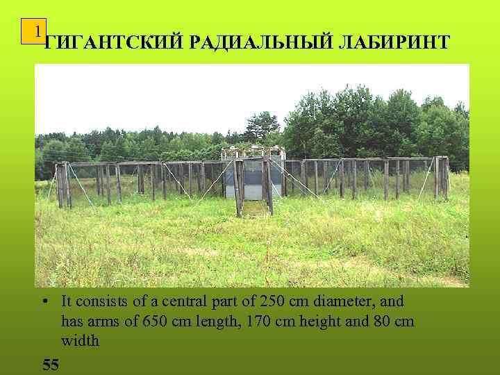 1 ГИГАНТСКИЙ РАДИАЛЬНЫЙ ЛАБИРИНТ • It consists of a central part of 250 cm