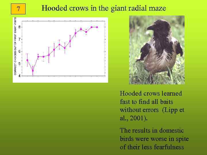 7  Hooded crows in the giant radial maze