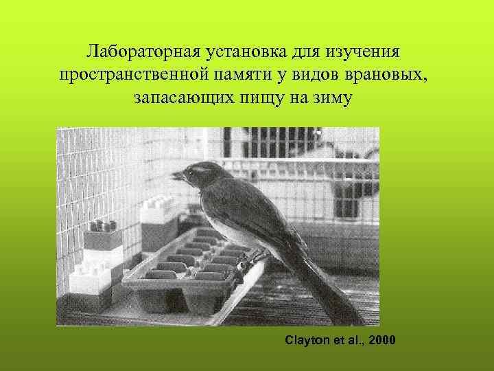 Лабораторная установка для изучения пространственной памяти у видов врановых,   запасающих