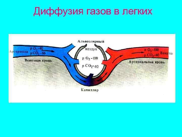 Диффузия газов в легких    40