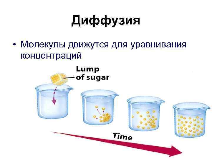 Диффузия • Молекулы движутся для уравнивания  концентраций
