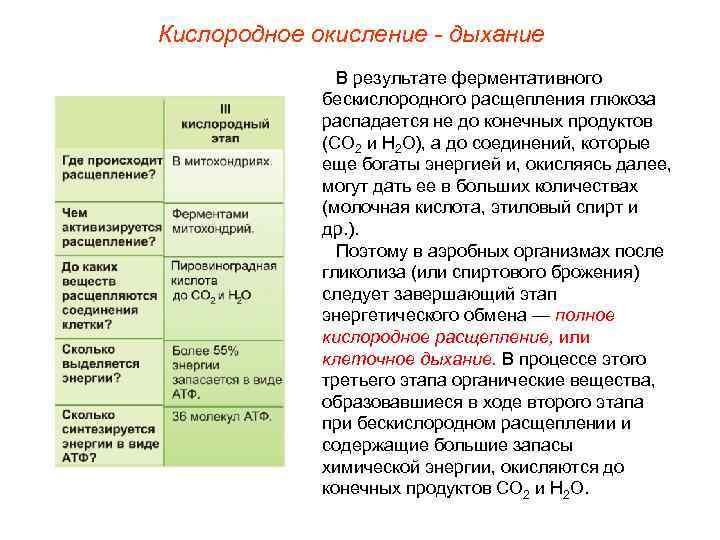 Кислородное окисление - дыхание    В результате ферментативного    бескислородного