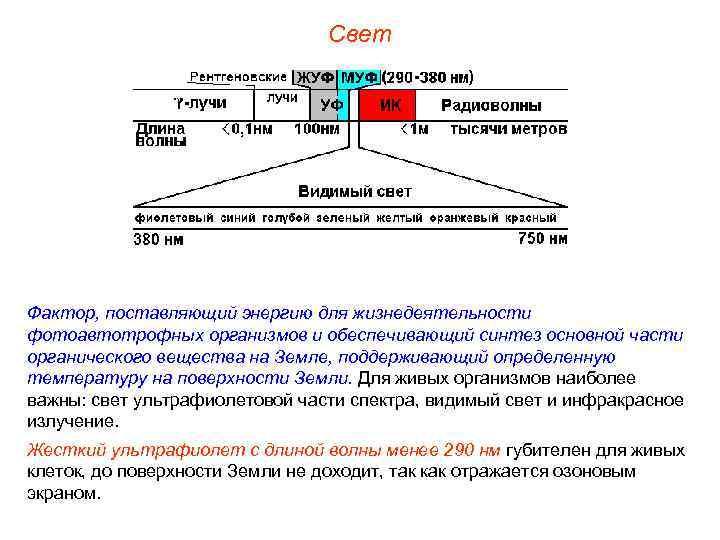 Свет Фактор, поставляющий энергию для жизнедеятельности фотоавтотрофных организмов