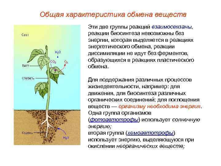 Общая характеристика обмена веществ  Эти две группы реакций взаимосвязаны,   реакции биосинтеза