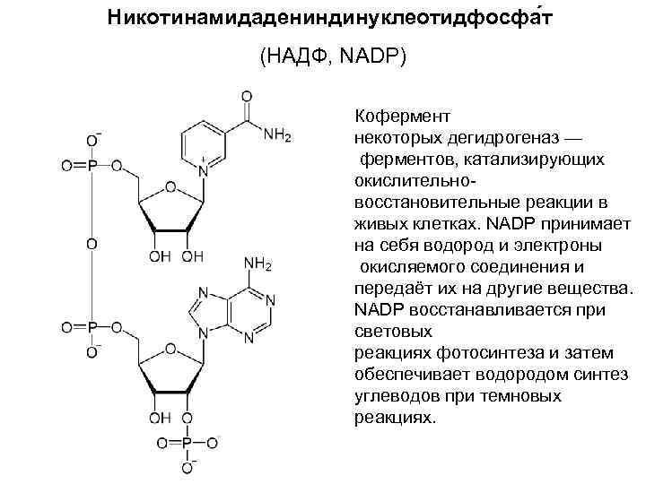 Никотинамидадениндинуклеотидфосфа т   (НАДФ, NADP)     Кофермент