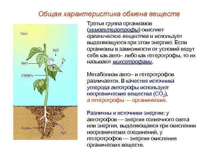 Общая характеристика обмена веществ   Третья группа организмов   (хемогетеротрофы) окисляет