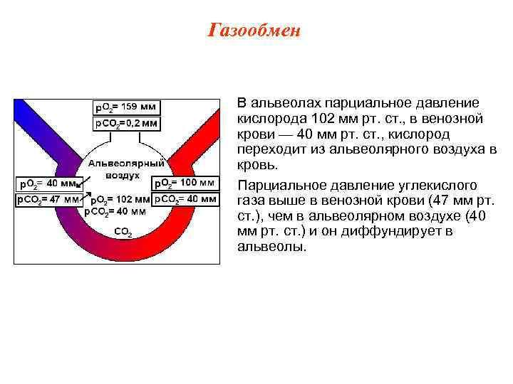 Газообмен В альвеолах парциальное давление  кислорода 102 мм рт. ст. , в венозной