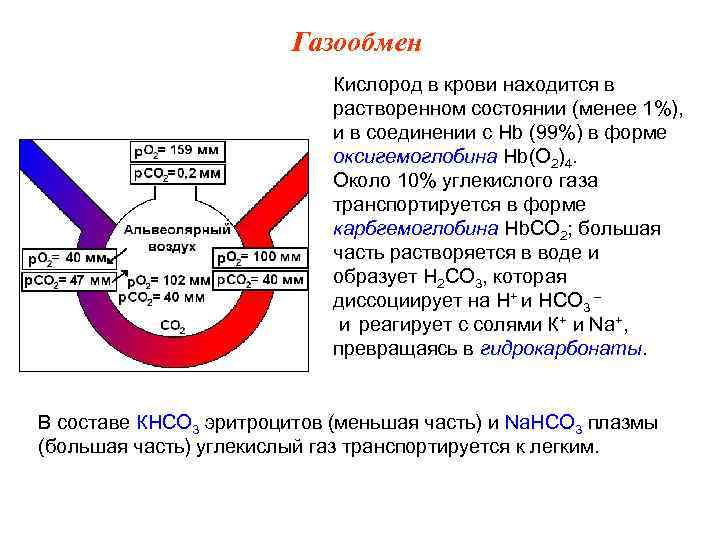 Газообмен     Кислород в крови находится в