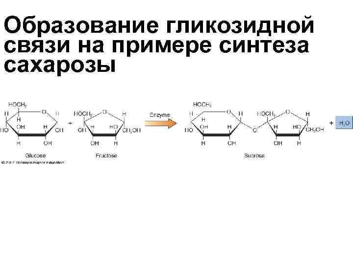 Образование гликозидной связи на примере синтеза сахарозы