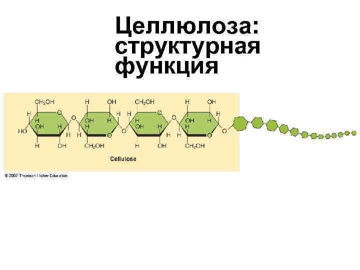 Целлюлоза:  структурная функция