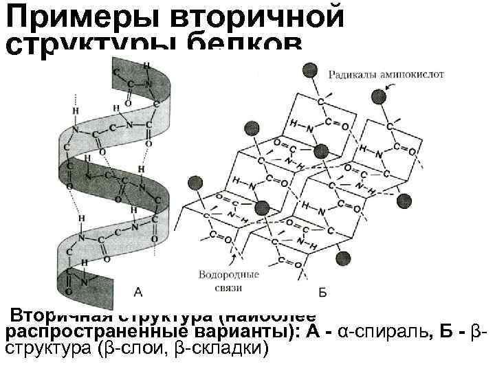 Примеры вторичной структуры белков Вторичная структура (наиболее распространенные варианты): А - α-спираль, Б -