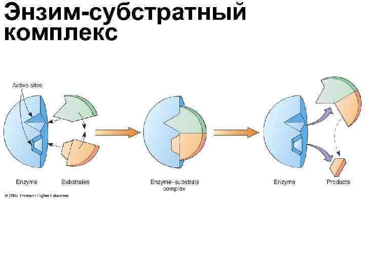 Энзим-субстратный комплекс