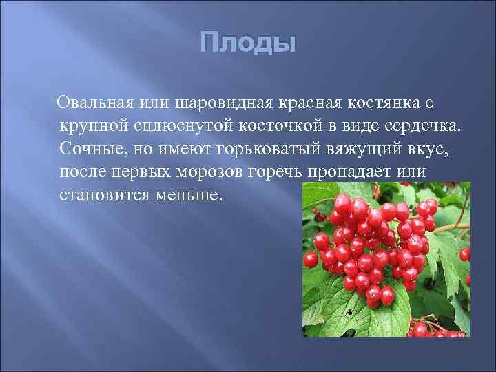 Плоды Овальная или шаровидная красная костянка с крупной сплюснутой косточкой