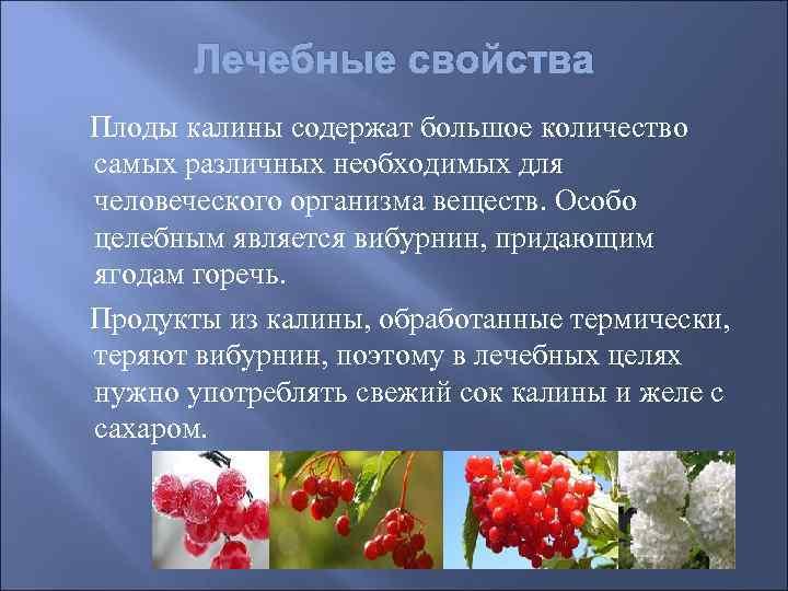 Лечебные свойства Плоды калины содержат большое количество самых различных необходимых для