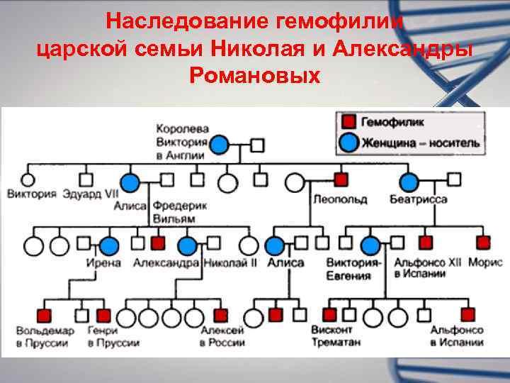 Наследование гемофилии царской семьи Николая и Александры   Романовых