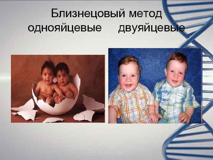 Близнецовый метод однояйцевые двуяйцевые