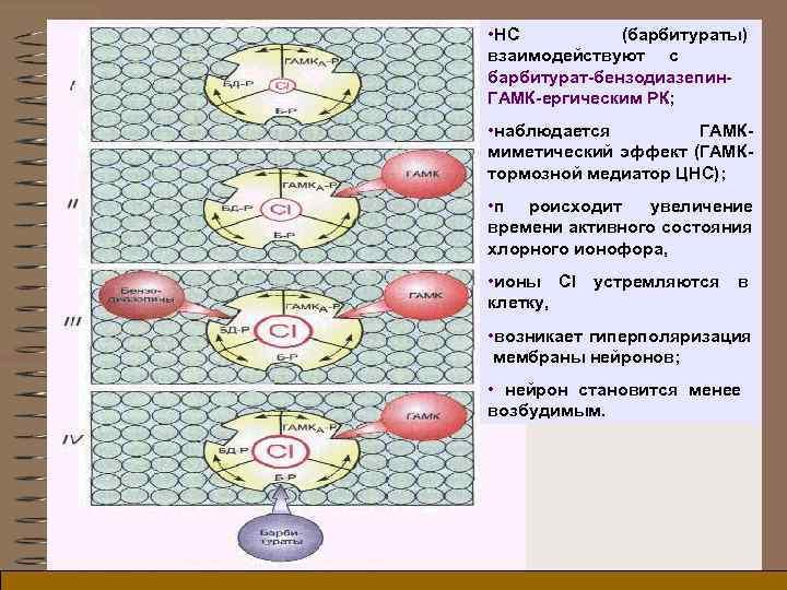 • НС  (барбитураты) взаимодействуют c  барбитурат-бензодиазепин- ГАМК-ергическим РК;  • наблюдается