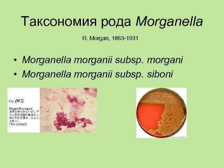 Таксономия рода Morganella    R. Morgan, 1863 -1931 • Morganella morganii