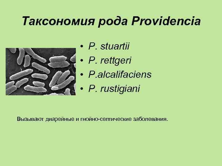 Таксономия рода Providencia    •  P. stuartii