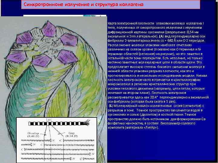 Синхротронноне излучение и структура коллагена      Карта электронной плотности упаковки