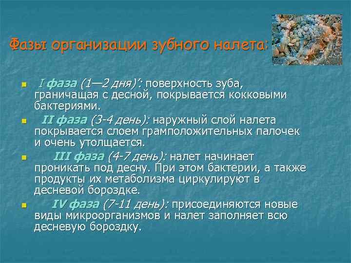 Фазы организации зубного налета: n  I фаза (1— 2 дня)': поверхность зуба,
