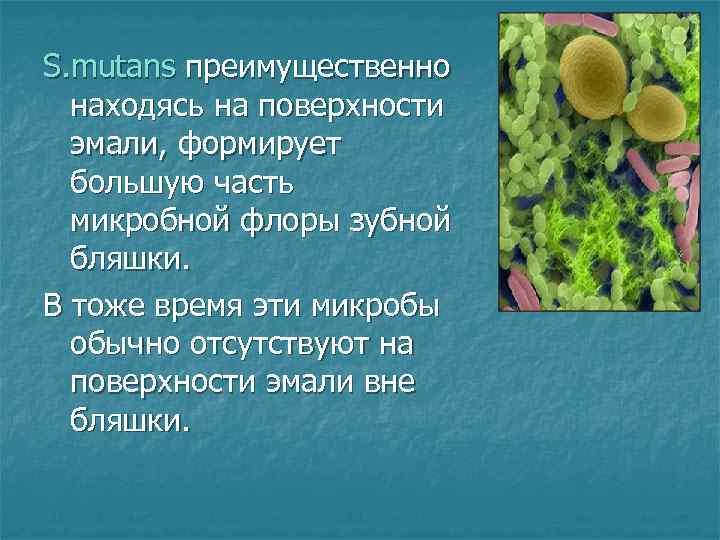 S. mutans преимущественно  находясь на поверхности  эмали, формирует  большую часть